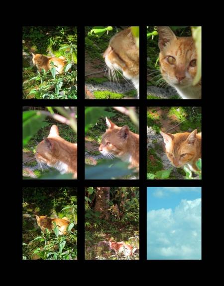 yellow-cat