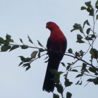 SQUARE-BIRD-