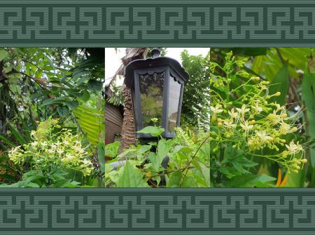 green-lantern-copy copy
