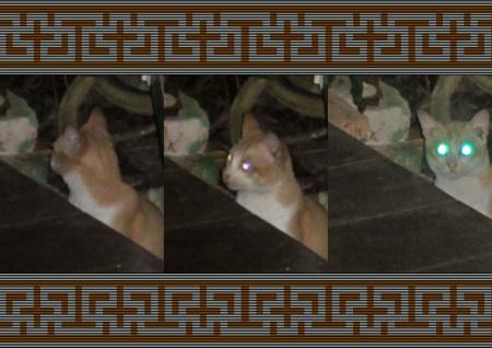 STORM CAT copy