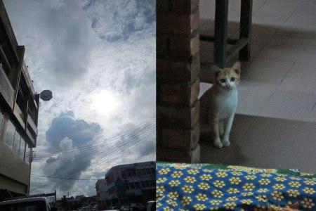 STORM-CAT