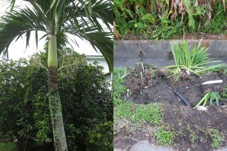 hole palm