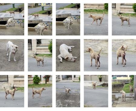white-dog1