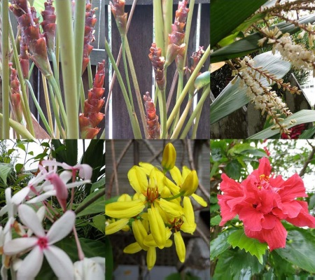 FLOWERS 2 SATHUDAY 39_Page_1 copy
