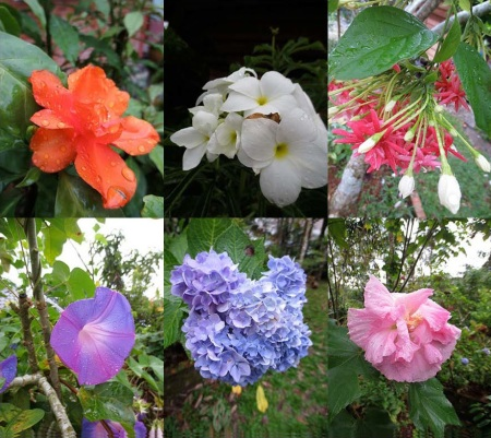 RSA'S FLOWERS_Page_1 copy