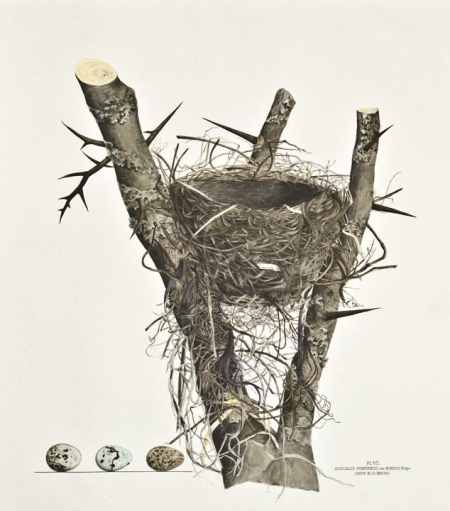 Illustrations-of-the-Nests-and-Eggs-of-Birds-of-Ohio1
