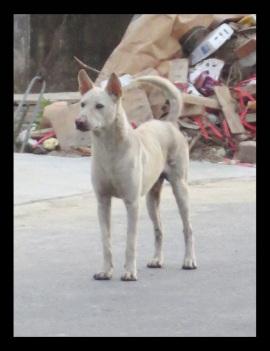 whitedog-sathuday-_page_4x-copy