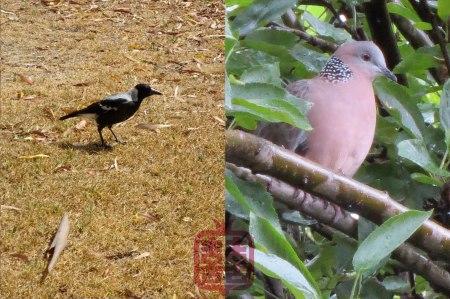 OZMOSIS-BIRDS