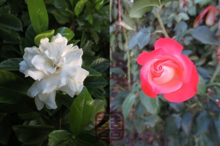 OZMOSIS-FLOWERS