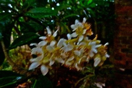 OZMOSIS-2-FLOWER-NIGHT-