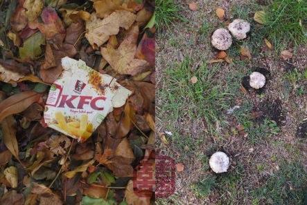 ozmosis-autumn-kfc-mush