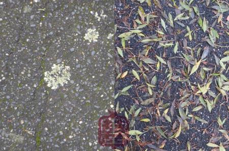 ozmosis-autumn-lichen