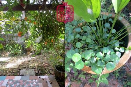 K'CHING-garden