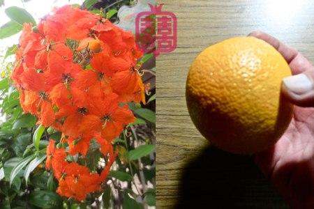 K'CHING-skull-orange