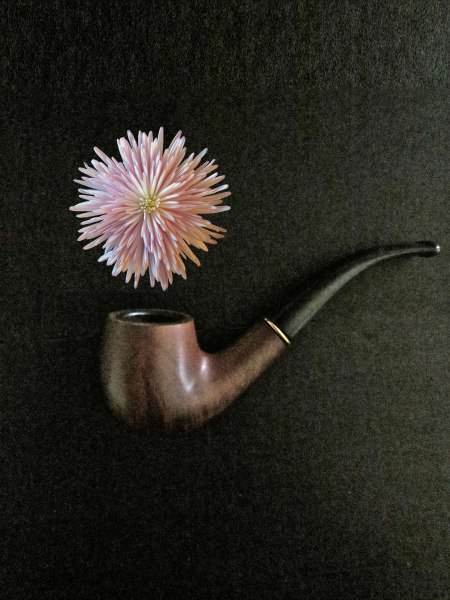 IS-THIS-A-PIPE-FLOWER